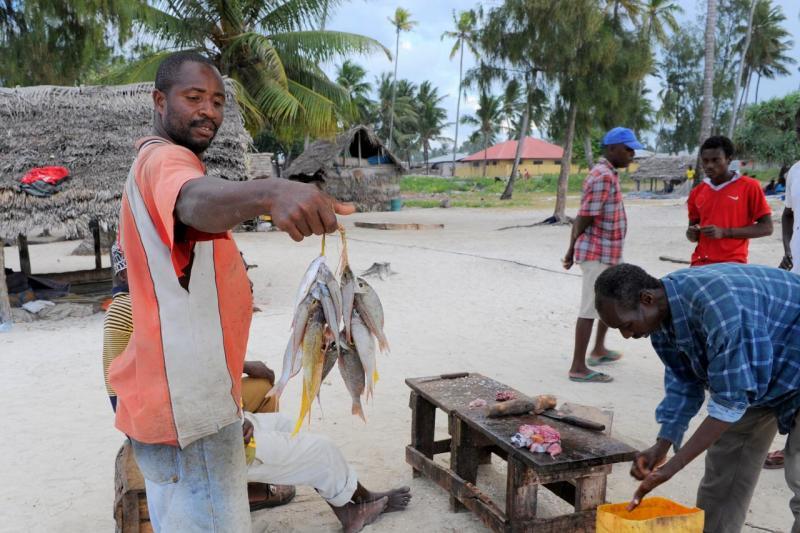 Retour de pêche au marché de Nungwi