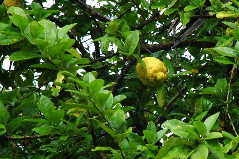 Faune et Flore de la Martinique