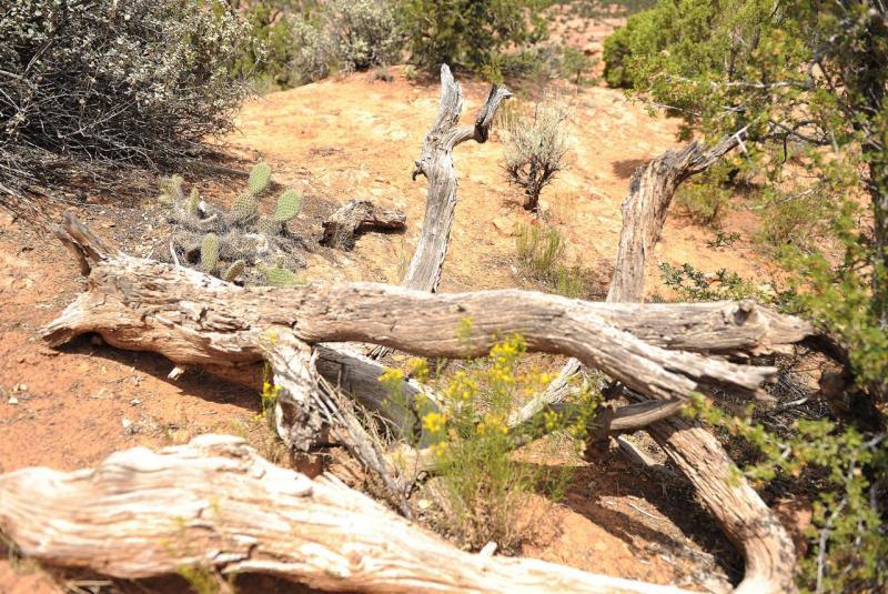 Balade dans le National Navajo Monument
